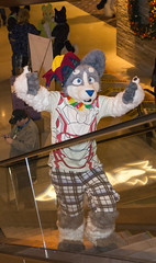 _DSC3774 (Acrufox) Tags: midwest furfest 2015 furry convention december hyatt regency ohare rosemont chicago illinois acrufox fursuit fursuiting mff2015