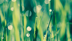 refreshing (SteffPicture) Tags: green grass drops gras grn grassland refreshing bladeofgrass grasland wassertropf graslandschaft steffpicture