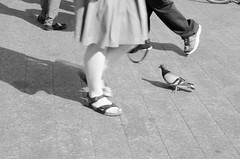 walk like a new york pigeon (zac evans photography) Tags: city nyc urban newyork feet brooklyn walking island metro pigeons sidewalk queens manhatten staten yaszacevansphoto
