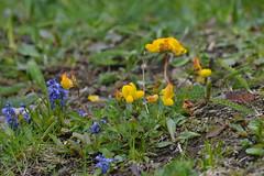 DSC_4712 (d90-fan) Tags: animals outdoors austria tiere sterreich natur pferde schnecke rauris fohlen hohetauern tauern krumltal murmeltiere raurisertal