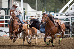 Sundre Pro Rodeo 2015 (tallhuskymike) Tags: horse outdoors cowboy action event alberta rodeo 2015 sundre prorodeo