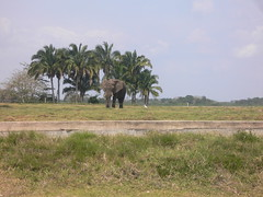 Joven elefante (Caneckman) Tags: parque naturaleza animales tabasco villahermosa vegetacion yumka