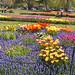The amazing tulips in Washington Park, Albany. Photo: Wendy Weeden, Loudonville NY.