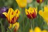 _DSC0817 (N.Sample) Tags: flowers bad blumen wildungen brunnenallee