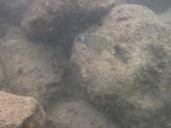 Kauia Day 5-237 (djfrantic) Tags: hawaii snorkeling kauai poipu aloha hanalei summervacation kilauea kee mahalo kapaa familyvacation princeville lihue kalaheo hanapepe gardenisle nukumoi