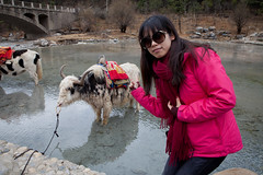 At Blue Moon Valley, Yunnan China (Eason Q) Tags: china shadow yak sky cloud mountain snow nature water beauty horizontal standing outdoors photography day fulllength valley domesticanimals lijiang onepeople mountainrange jadedragonsnowmountain colorimage terracedfield yunnanprovince animalthemes coldtemperature gettychinaq3