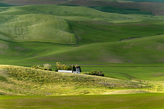 In Every Dimension (Northern Straits Photo) Tags: sunset sunlight green nature beautiful landscape washington spring awesome fields wa farms top10 pastoral palouse steptoebutte northernstraitsphotography