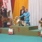 "2e best in group dogshow Liege <a style=""margin-left:10px; font-size:0.8em;"" href=""http://www.flickr.com/photos/68800547@N03/7698415708/"" target=""_blank"">@flickr</a>"