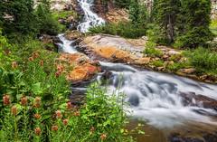 Lake Creek Waterfall (Guy Schmickle) Tags: waterfall colorado wildflowers sanjuanmountains lakecreek weminuchewilderness