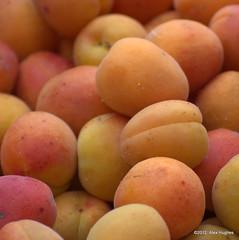 Apricots (Rednaxela13) Tags: holiday france canon eos apricots aveyron southwestfrance alexhughes 60d canoneos60d alexanderhughes