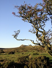 Haytor view (Ipple Pen) Tags: