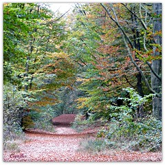 Herfstbos bij Veenendaal - Autumnwood. (Cajaflez) Tags: wood autumn trees colors forest bomen path ngc herfst panasonic leafs bos rhenen herfstkleuren veenendaal bladeren bospad zandgat thegalaxy kwintelooyen 100commentgroup mygearandme mygearandmepremium dmcfz150 flickrstruereflectionlevel1 rememberthatmomentlevel1