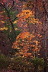 Deep Forest Treasure (Happy Photographer) Tags: autumn tree forest fallcolor arkansas happyphotographer mygearandme