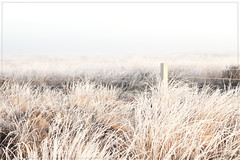Frozen in April (aNNaj) Tags: mist fog sunrise bevroren gras vorst zonsopkomst vrieskou dwingelderveld nachtvorst vriesnacht kloosterveld otherkeywords|kloosterveen