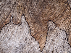 The world is full of miracles my friend ... isn't it? (martina.stang) Tags: wood abstract miracle cartoon monk treetrunk minimalism association naturalpainting naturaldrawing