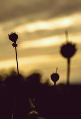 (** Lor **) Tags: sunset primavera atardecer spring aire libre siluetas