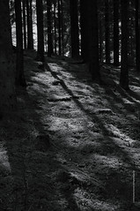 shadows in the forest (imagomagia) Tags: wood blackandwhite art nature forest shadows artgallery naturallight lowkey bnw fineartphotography blackandwhitephotography magicrealism artphoto magicalrealism artphotography artofvisual bwconversiontechnique