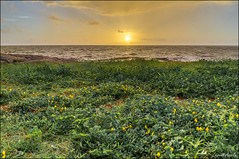 Jaune, le soleil s'est finalement impos... (Laurent Asselin) Tags: ocean sea sun mer water clouds fleurs jaune sunrise soleil eau ciel nuages paysage lever kourou aube ocan guyane