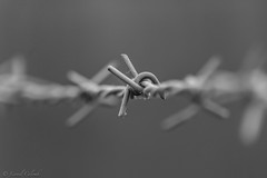 Barbed wire (Lionelcolomb) Tags: bw canon wire noiretblanc deep fil sigma barber noirblanc barbelé perpective profondeur