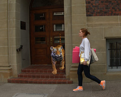 Surprise (swong95765) Tags: woman walking funny tiger humor redhead sidewalk doorway surprise bengal oblivious unaware unsuspecting