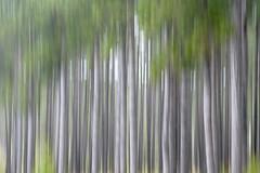 Tree Tilt (Sam Wagner Photography) Tags: trees motion blur forest landscape spring long exposure smooth bark tilt sooc