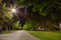 136A2596 (Central Washington University) Tags: chestnut street mall night summer