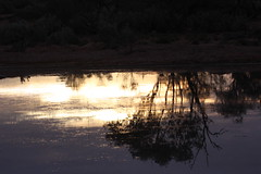 Desert Sunrise (Arthur Chapman) Tags: sunrise australia outback southaustralia outbackaustralia lakeeyre geo:country=australia muloorina geocode:method=gps geocode:accuracy=100meters muloorinastation