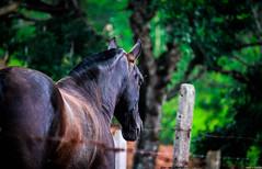 B Jesus (JoanZoniga) Tags: jczuniga costarica atenas horse canon