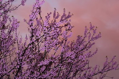 Nature's Drama (Jennifer737) Tags: trees beautiful colorful stunning brilliant afteritrains mygearandme
