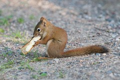 DSC_4384 (Debbie Prediger Photography) Tags: camping lake photography wildlife debbie prediger