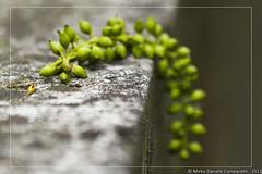 "Pending fruits <a style=""margin-left:10px; font-size:0.8em;"" href=""http://www.flickr.com/photos/66444177@N04/6945544442/"" target=""_blank"">@flickr</a>"