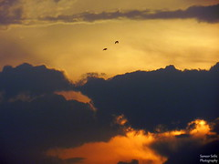 Perfect moment (Sameer0406) Tags: sunset sky orange topf25 birds clouds sunrise topv777 topf100 topv50