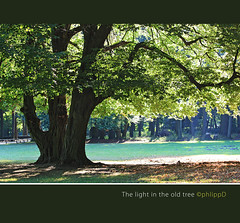 Light in the tree (Phlipp D) Tags: light tree licht baum coth thegalaxy platinumheartaward treesdiestandingup bestcapturesaoi coth5 mygearandme mygearandmepremium mygearandmebronze mygearandmesilver mygearandmegold mygearandmeplatinum mygearandmediamond