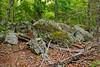 Big Hill Pond State Park (bhophotos) Tags: statepark travel trees usa green nature landscape geotagged nikon rocks tennessee trail swamp midsouth westtennessee d80 2470mmf28g bighillpond bruceoakley bighiilpondstatepark