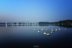Slumbering on West Lake (Hangzhou) (Lao An (PhotonMix)) Tags: china bridge sleeping lake water landscape dawn nikon asia quiet scenic westlake swans silence hangzhou serene resting zhejiang calmwater sleepingswans d7000 baicauseway photonmix