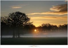 Sunrise (5D029758) (nandOOnline) Tags: sky cloud sun mist nature field sunrise landscape twilight belgi natuur lucht veld zon brabant landschap schemering wolk morningred zonsopkomst arendonk ochtendrood goorken