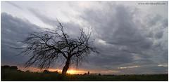 Gli ultimi raggi di sole (Panfili David) Tags: italia tramonto nuvole natura cielo panoramica sole albero paesaggio raggi friuli