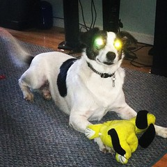 california ca usa dog square robot eyes lofi july tracy squareformat laser bobby ricky 2012 daveparker rickybobby iphone365 iphoneography instagramapp uploaded:by=instagram