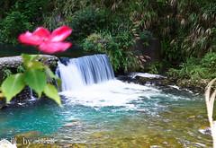 Natural (娜 娜☂Nana) Tags: life light plant tree green love nature beautiful backlight creek nikon colorful natural taiwan lovely 台灣 台灣taiwan i 我愛台灣 d7000 桃園復興鄉青龍谷