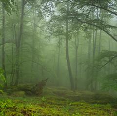 Magic water (Ahio) Tags: green nature fog forest woods beech haya bosques fagussylvatica piloña smcpentaxfa31mmf18allimited pentaxk5 montesdelinfierno montecorbera
