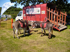 DONKEYS AT THE CRAFT FAIR.. (ronsaunders47) Tags: cheshire donkey craftfair