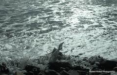 Poof! Water, wind, waves, and sea foam. (robert.rinkel) Tags: ri autumn usa storm reflection fall robert halloween water monster clouds island photography october rocks surf waves shine cloudy sandy tide hurricane erosion newport gradient damage coastline hybrid bomb rhode subtropical surge merge 2012 noreaster astronomical convergance anomoly rinkel newportcounty aquidneckisland eastonsbeach shinywater nikond90 frankenstorm lowbarometricpressure