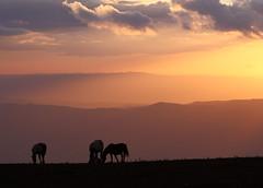 Freedom (da.geli) Tags: sunset horses italy mountain landscape freedom umbria stunningskies mygearandme mygearandmepremium mygearandmebronze mygearandmesilver mygearandmegold mygearandmeplatinum parcodelmontesubasio