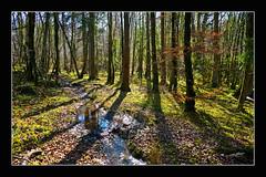 """Petit ruisseau en sous bois """"2014"""" (Christian Labeaune) Tags: en france du paysages impression bois petit sous 2014 ruisseau chtillonnais bourgognectedor chatillonsurseine21400 christianlabeaune"""