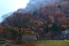 Fall & Gassh-zukuri house (@jailanish) Tags: flowers fall japan kyoto gifu unescoworldheritage shirakawago colorsoffall natgeowannabe