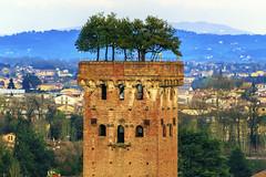 Sky garden, Lucca (Arutemu) Tags: city italien italy tower architecture canon italian europe italia european cityscape view eu ciudad lucca medieval vista toscana tamron renaissance ville           tamron28300  eos6d  canon6d