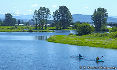 West Coast Day (R. Sawdon Photography) Tags: blue green water sport shoreline shore kayaking boating paddling mapleridge pittmeadows harrisroad paddeling alouetteriver sliverbridge rsawdonphotography russsawdon
