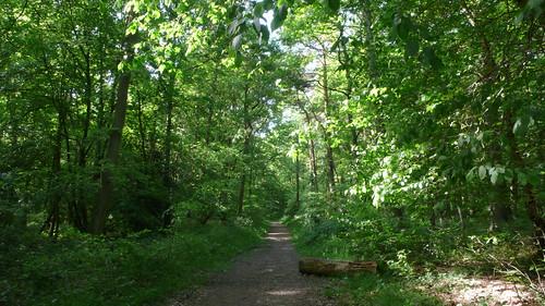Promenade en forêt de Roumare de Canteleu à Saint Martin de Boscherville