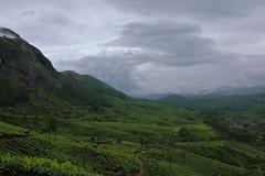 Scenic.. (Connoisseur.Rohit) Tags: travel india munnar iamnikon d7200 iamd7200