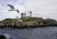 Lighthouse Flyby (Jeff Clow) Tags: travel usa lighthouse birds outside outdoors coast spring getaway gull maine mothernature offthebeatenpath easternusa jeffrclow